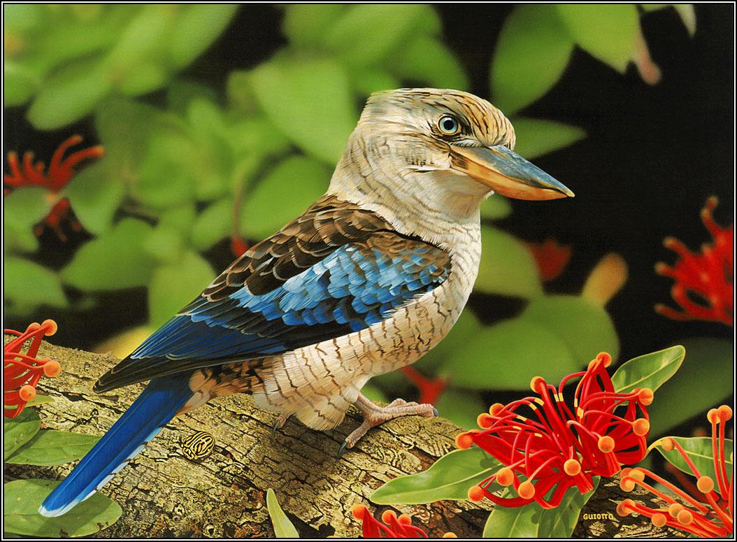 Name:  amazing_wild_life_photography_birds_desktop_wallpapers_4.jpg Views: 20 Size:  254.0 KB