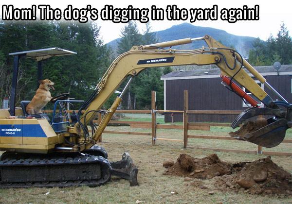 Name:  dog-humor-mom-dogs-digging-in-yard-again.jpg Views: 38 Size:  94.6 KB