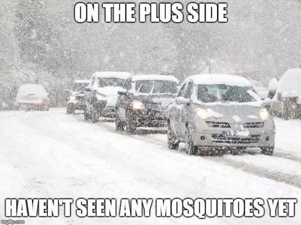 Name:  funny-photos-to-share-no-mosquitoes-winter.jpg