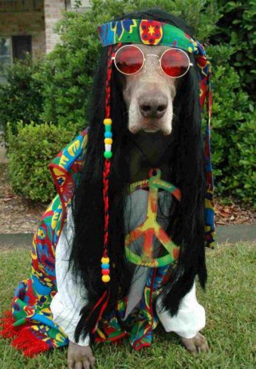 Name:  Hippie Dog.jpg Views: 22 Size:  81.5 KB