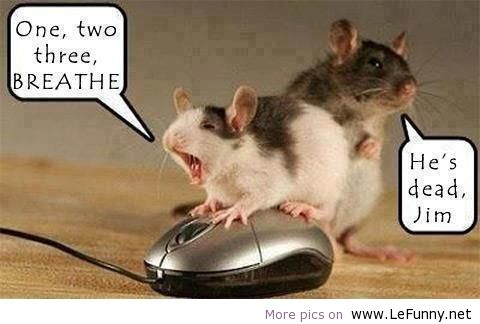 Name:  lefunny.net-funny-jokes-quotes-animals-pictures-Favim.com-568763.jpg Views: 27 Size:  26.7 KB