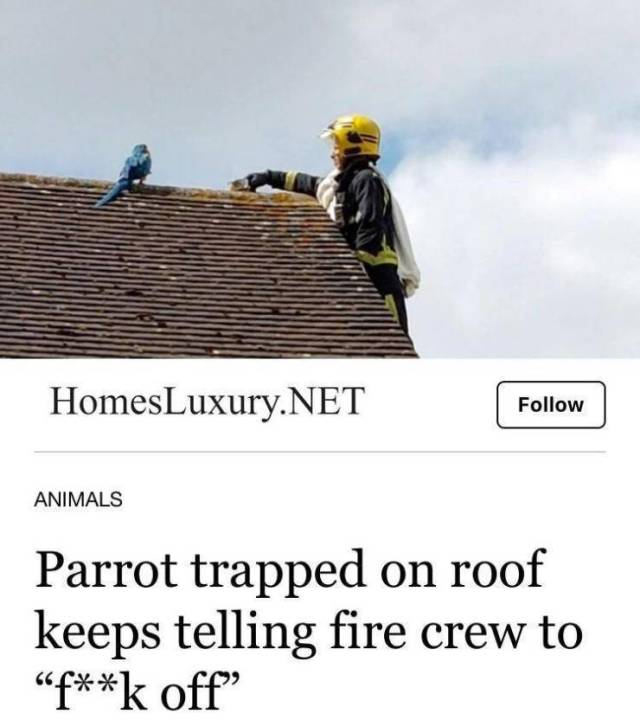 Name:  no-thats-not-my-parrot.jpg