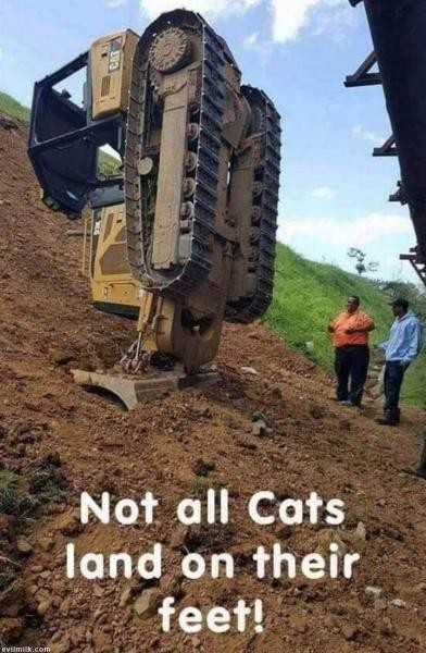 Name:  Not All Cats.jpg