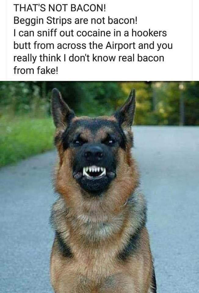 Name:  Thats not bacon.jpeg Views: 22 Size:  107.3 KB