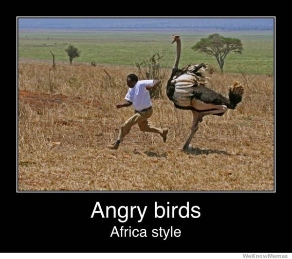 Name:  Top-20-most-funny-Angry-birds-memes-and-Jokes-.-.-.-Hilarious-Funny-Jokes-Funniest1.jpg Views: 26 Size:  50.2 KB